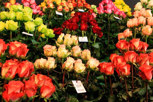 Выращивание роз: прибыль и затраты