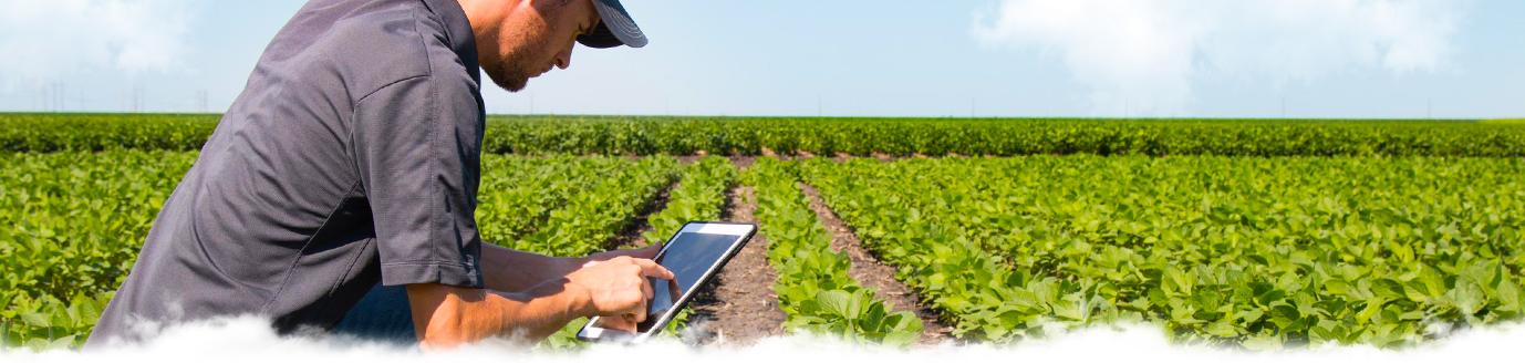 Новости и статьи о сельском хозяйстве